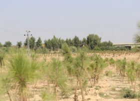 Trees Plated Near RingRoad